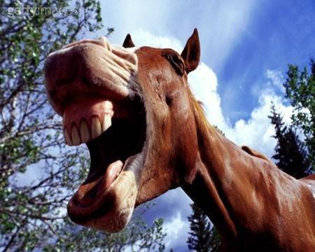 I denti dei cavalli: differenze e funzioni