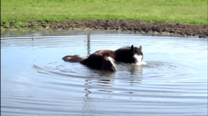 Bolle sott'acqua e i cavalli si divertono