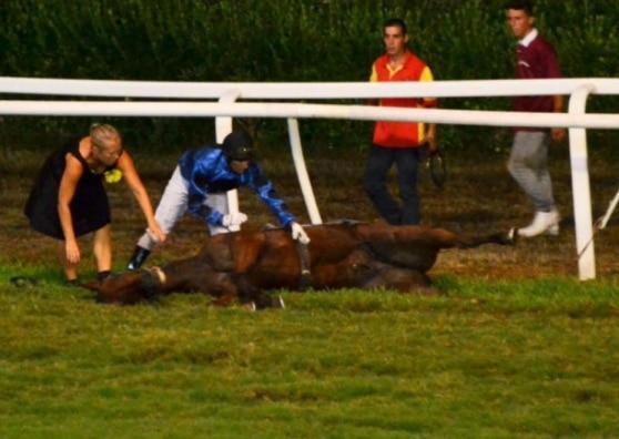 Caprilli choc: cavallo vince la corsa e muore