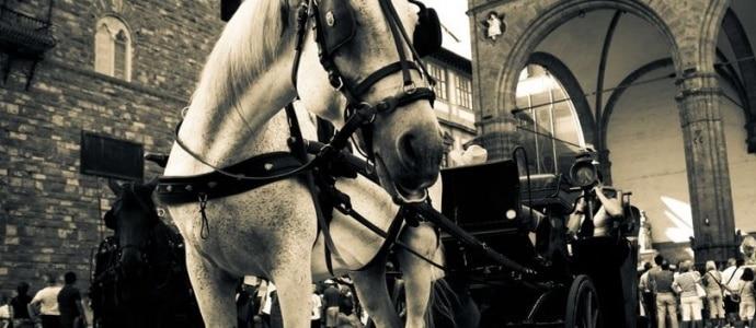 Fiaccheraio multato: troppo caldo per il benessere del cavallo