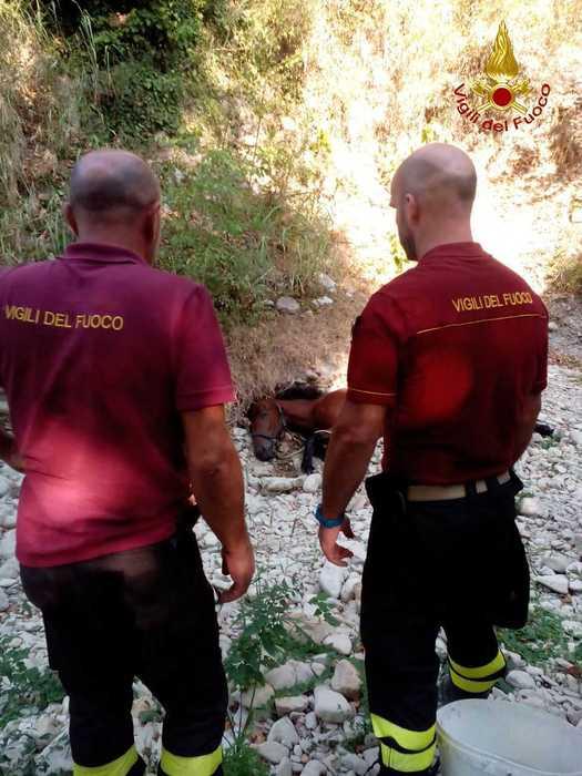 I vigili del fuoco salvano un cavallo caduto sul greto di un fiume