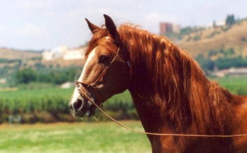 Il cavallo e il tetano