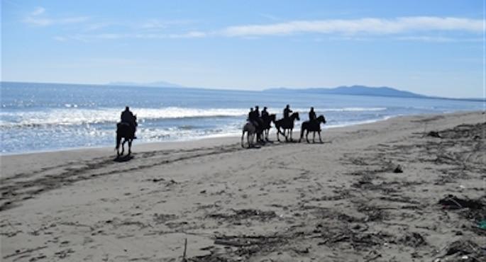 Multe salate per aver passeggiato a cavallo sulla spiaggia