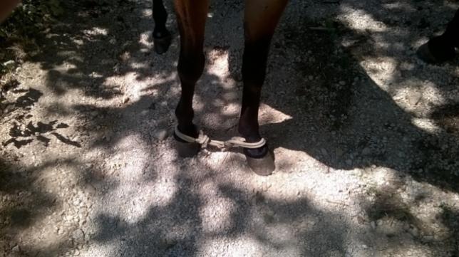 Salvati due cavalli che avevano le zampe legate
