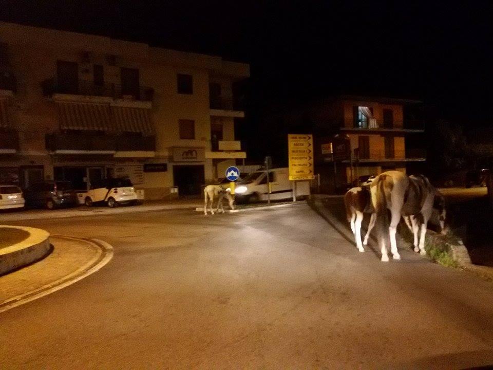 Torna il pericolo per i cavalli incustoditi per strada