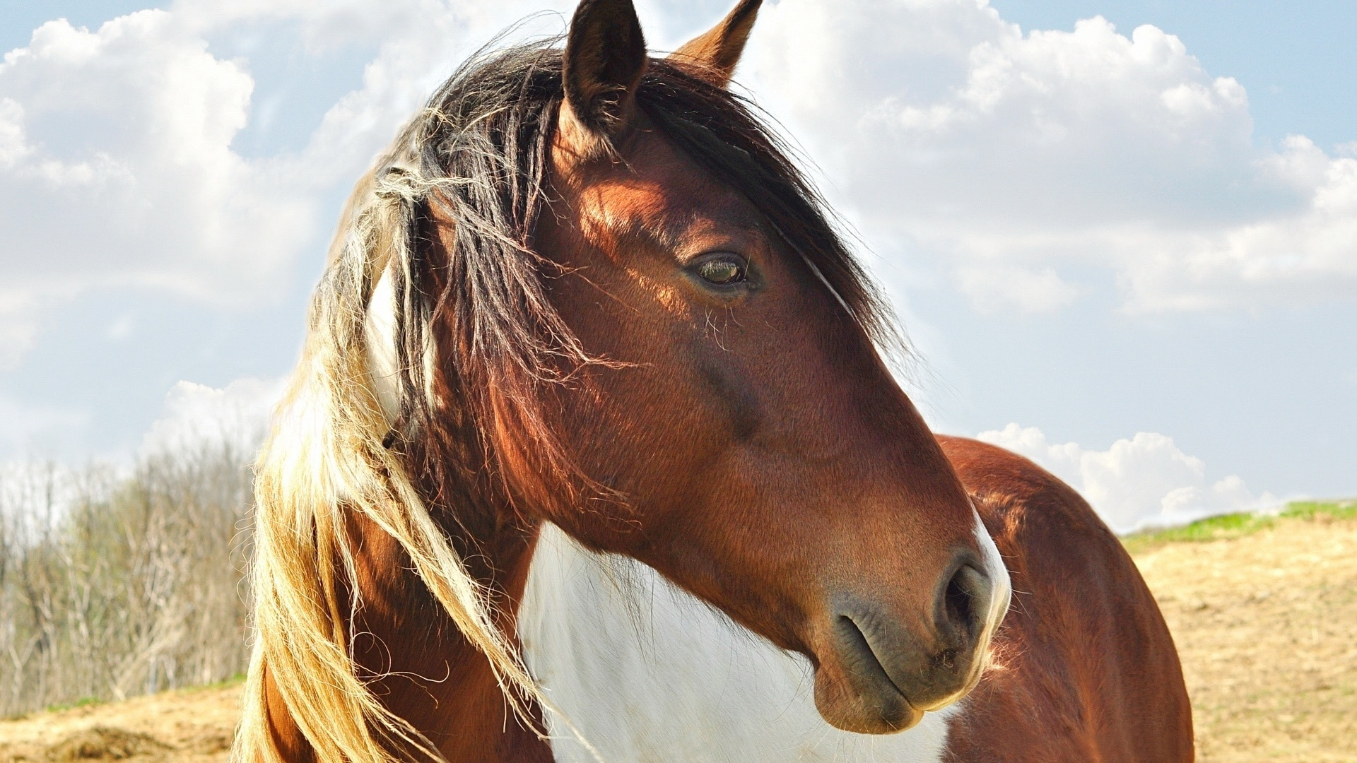 Perché i cavalli non possono respirare con la bocca?