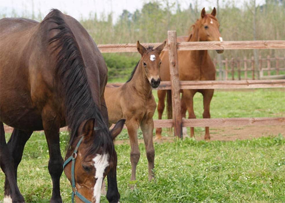 Allevamento abusivo di cavalli a Ballarò