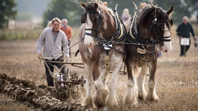 Anche cavalli al Campionato nazionale di aratura in Gran Bretagnia