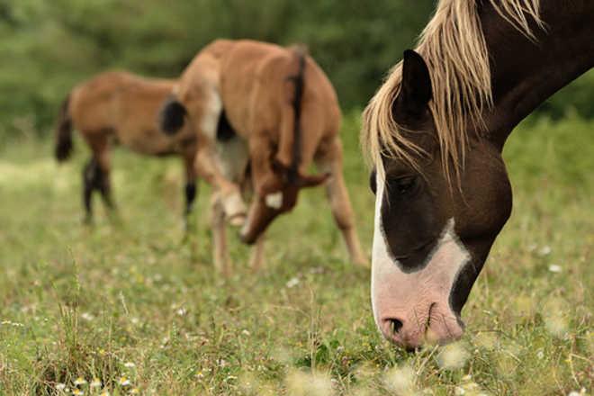 Cavalli e danni agli automezzi in Gran Bretagna