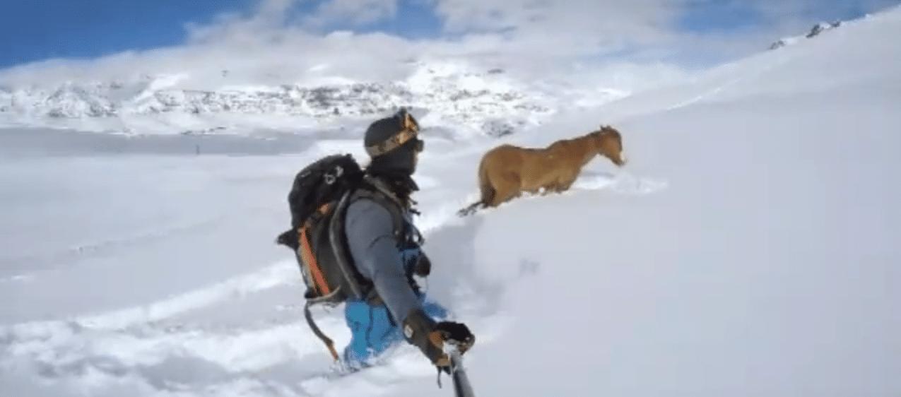 Cavallo bloccato nella neve salvato da due sowborder