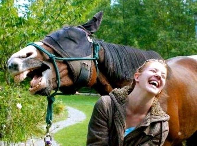 Comprendere il linguaggio del cavallo per una migliore relazione