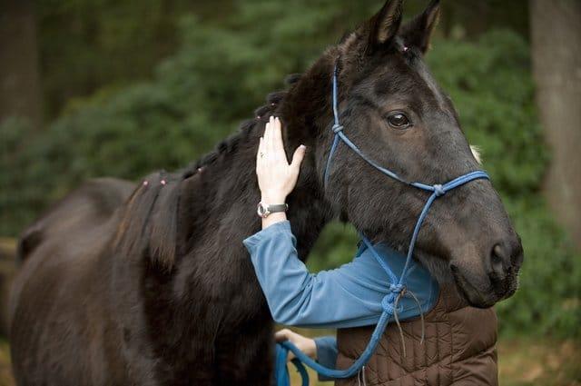 Consigli per creare una relazione positiva con il cavallo