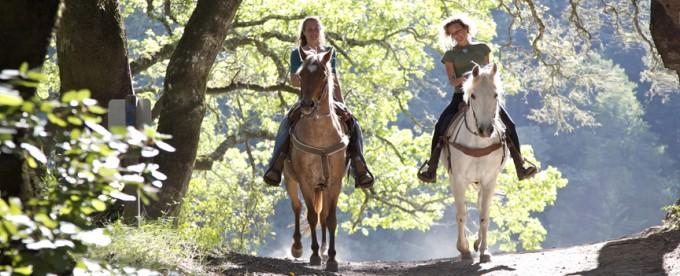 I cavalli e il codice della strada