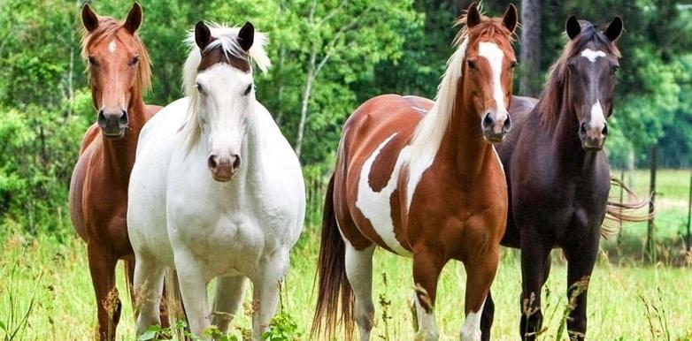 I cavalli e l'apprendimento