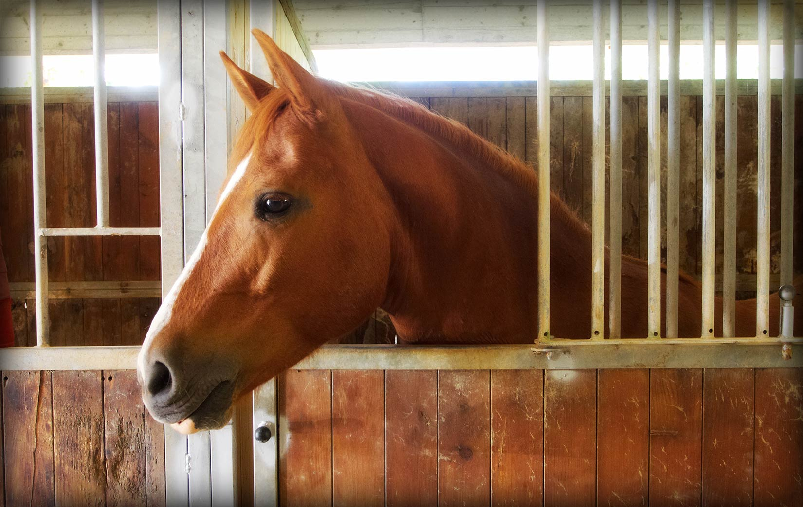 L'allevamento in box e i problemi comportamentali del cavallo