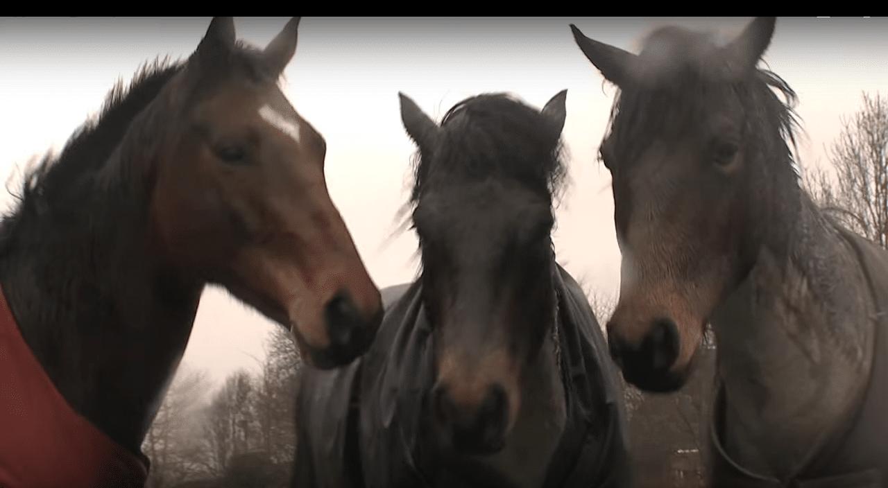 L'amico ritrovato, la storia di tre cavalli