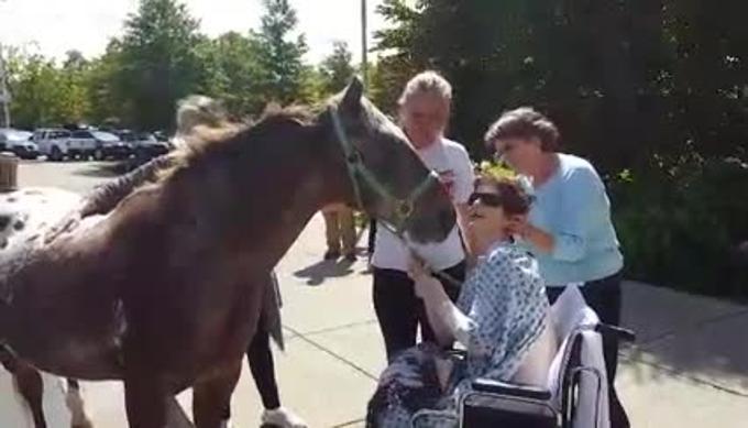 Saluto estremo per un cavallo alla padrona in fin di vita