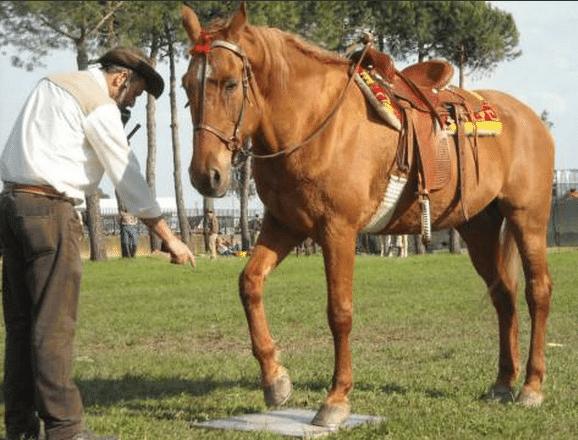 Sara e Sergio, spettacoli equestri educativi