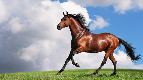 Un cavallo attraversa la strada, l'impatto inevitabile