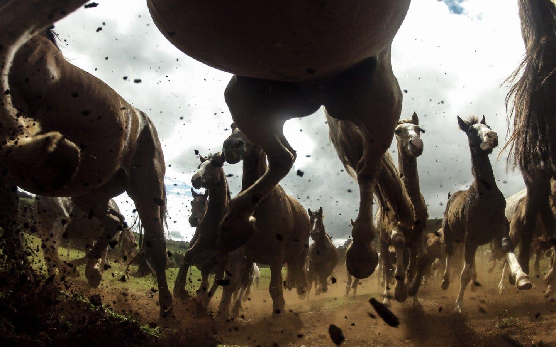 Una mandria di cavalli si scontra con un autobus: quindici cavalli morti